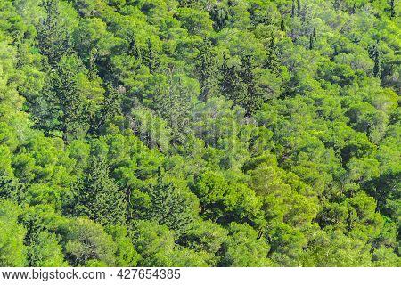 Leafy Landscape, Lycabettus Hill, Athens, Greece