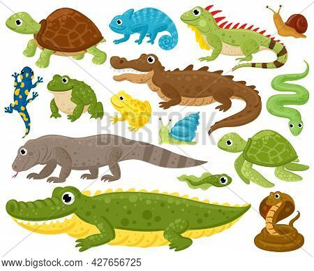 Cartoon Amphibians And Reptiles. Serpent, Reptile And Amphibians, Frog, Turtle, Iguana And Python Ve