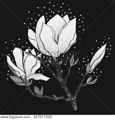 Magnolia Is A Flower Of A Tree Blooming In Spring On Black And White Twigs With Delicate Petals.they