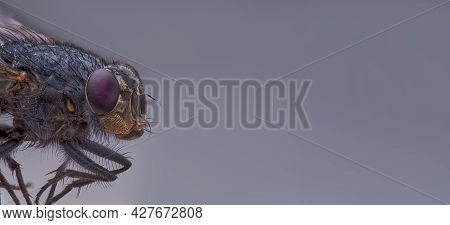 Macro Sharp And Detailed Connection Of The Surface Of A Fly's Eye In Red, A Housefly Head Close-up,