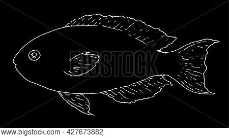 Vector Sketch Of The Sea Fish Scarus Rubroviolaceus. Isolated White Outline, Sea Fish On A Black Bac