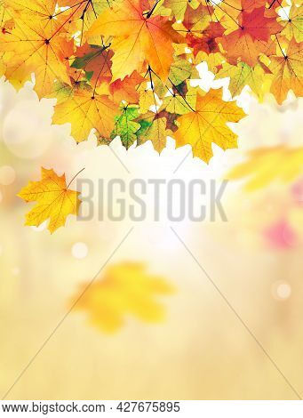 Autumn Leaves On The Fall Blurred Background. Autumn Concept.