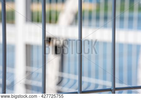 The Grid Of The Metal Vertical Fence Of The Park, A Summer Sunny Day, The Background Is Very Blurred