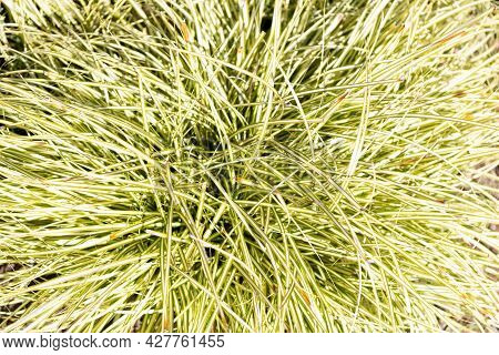 Green Leafy Natural Grass Plant Background, Grassy Texture