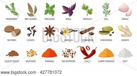 Cartoon . Food And Dishes Seasoning. Dry Condiment. Chilli Pepper And Anise. Ginger Root. Cardamom O