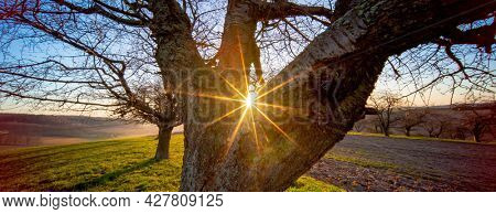 Tree trunk and early morning sunrise in spring