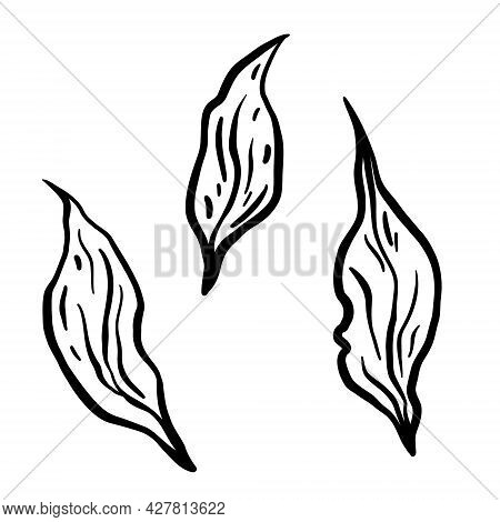 Leaves Branch. Hand Drawn Vector Illustration. Monochrome Black And White Ink Sketch. Line Art. Isol