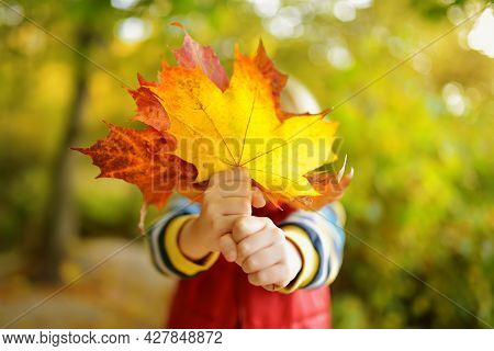 Little Boy Having Fun During Stroll In Forest At Sunny Autumn Day. Child Covers Her Face With Maple