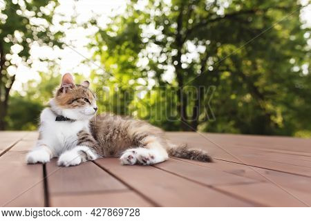 Beautiful Tricolor Cat Lies On A Brown Wooden Terrace With Blurred Green Background. Happy Lying Cat