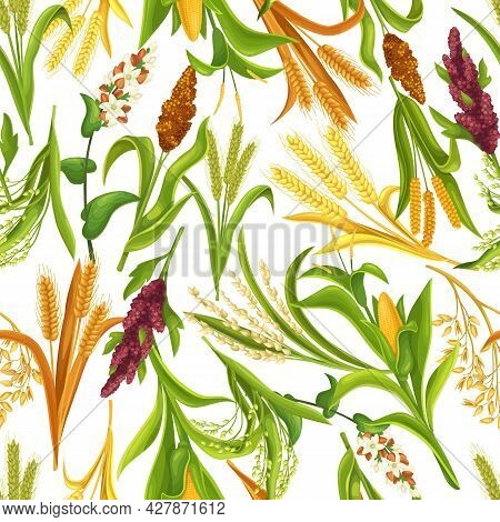 Grass Cereal Crops, Agricultural Plant Seamless Pattern, Vector Illustration. Cereal Plants Of Rice,