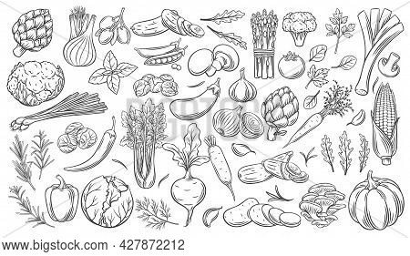 Vegetables Outline Vector Icons Set. Monochrome Artichoke, Leek, Culinary Herbs, Corn, Garlic, Cucum