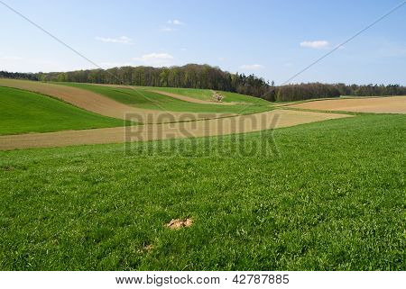Spring's fields and meadows