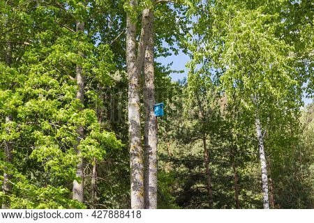 Wooden Nesting Box Painted Blue On The Trunk Of The Old Aspen In Spring Park