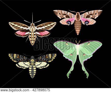 Vector Set Of High Detailed Night Moths