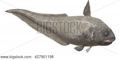 3d Armed Longtail On A White Background