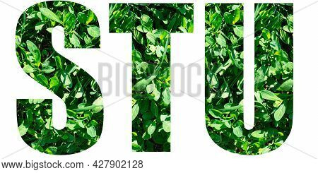 English Alphabet Letters Set. Letters S T U From Green Grass Isolated On White Background. Elements