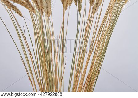 Close-up Sheaf Of Golden Wheat Ears On White Background.