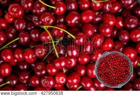 Harvest Red Cherries In An Iron Bucket. Red Wine Fruits. Harvest The Garden. Iron Bucket. Agricultur