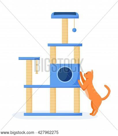 Cat Tree Or House With Scratching Posts. Cute Red Cat Interested In Cat Tower And Scratching It. Cat