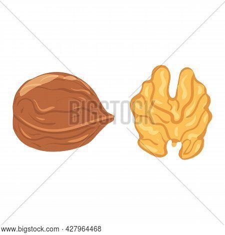 Walnut, Natural Healthy Organic Nutrition Product, Kernel. Vector Doodle Cartoon Flat Trendy Illustr
