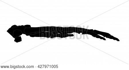 Side View Of Forearm In Black And White Isolated Background