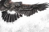 low-flying eagle illustration over artistic background, made with digital tablet poster