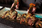 two alive marine cancers in restaurateur's hands poster