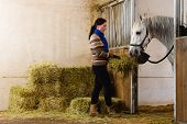 Woman give a hay for a horse poster
