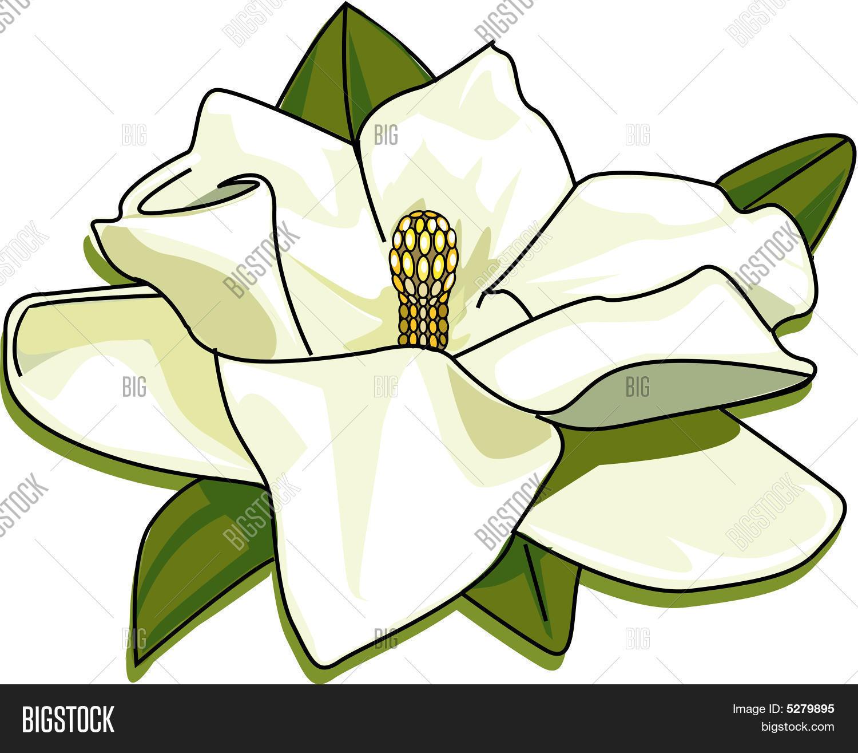White Dogwood Flower Vector Photo Free Trial Bigstock