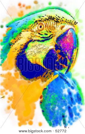 Illustrated Macaw...