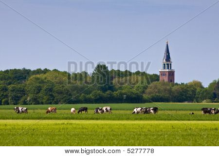 Countryside with church and cows in a meadow poster