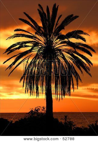 Silhouetted Palm Against The Sunset...