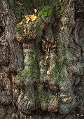 Trunk of an old tree. Natural textured background poster