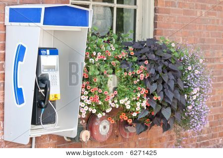 Public Telephone Beside Flowers On Outside Wall