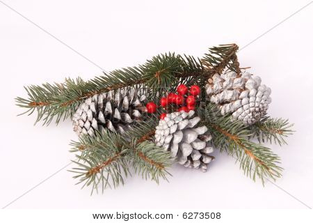 Pine-cones And Berries On Blue Juniper