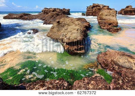 Seagrass Plants Among The Rocks At Low Tide, Australia