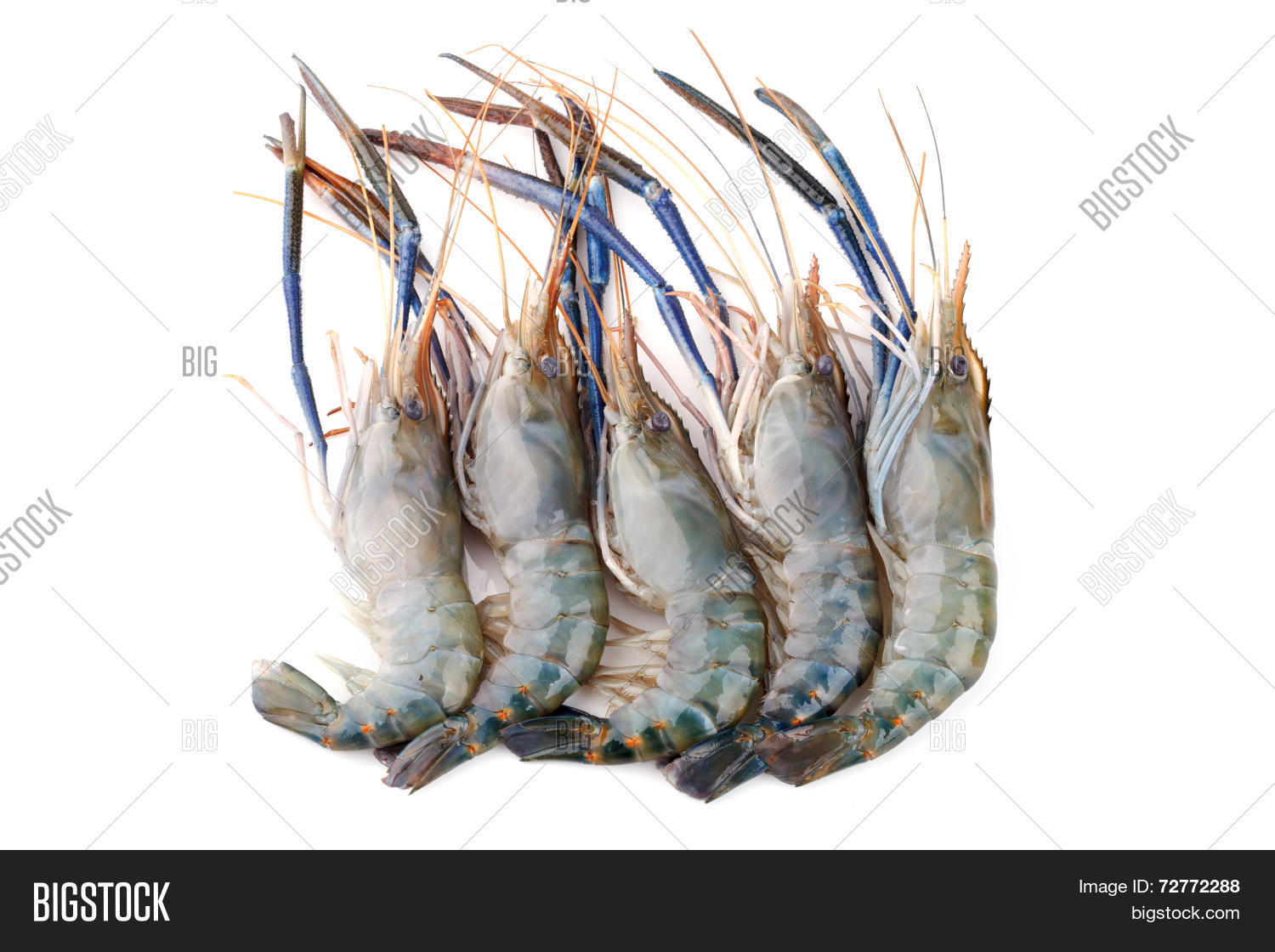 Giant Freshwater Prawn Image & Photo (Free Trial) | Bigstock