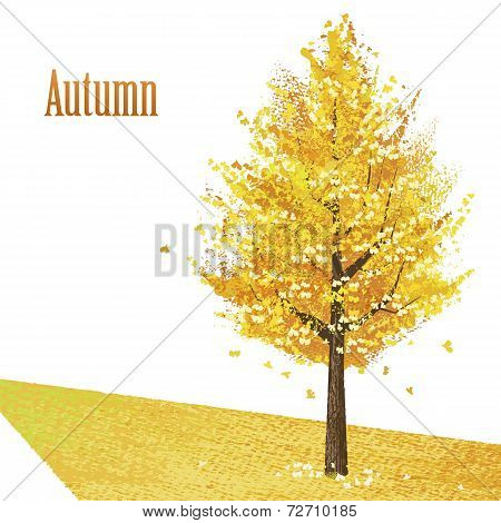 Gingko With Golden Leaves In Late Autumn