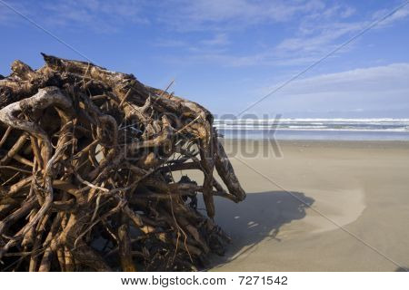 Roots On The Beach