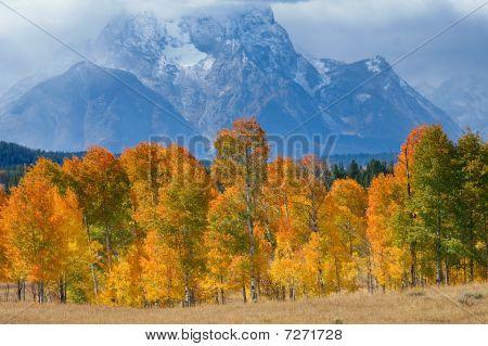 Fall At Grand Tetons