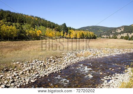 Colorado Aspens And Stream