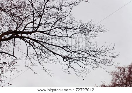 Naked Branches Of A Tree Against