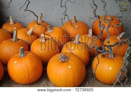 Baby Bear Pumpkins