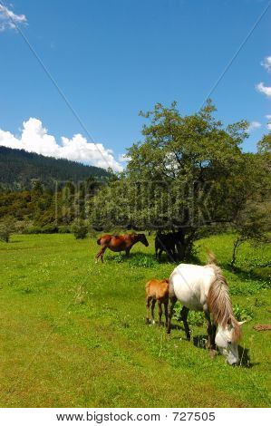 Grasslands Of Nyingchi