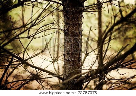 Cork Of The Tree
