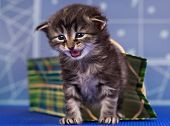 Cute little kitten in a bright gift bag over blue background poster