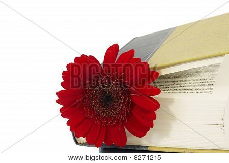 Closed Book With A Red Flower.