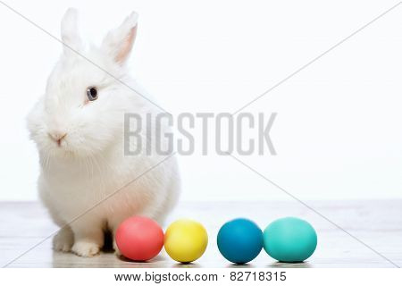 Little cuddle rabbit with Easter eggs