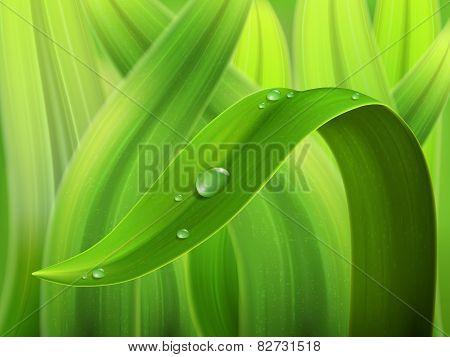 Water Drop On Grass Macro