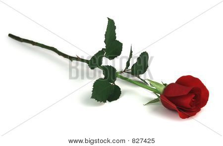single red rose on white background poster